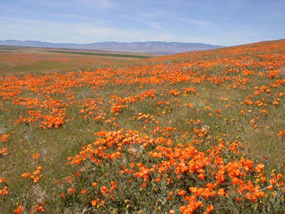 Southern California - A Desert in Bloom - NBH Travel Journal