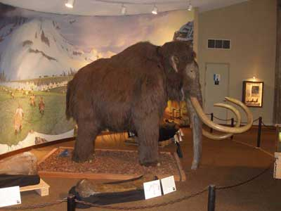 Los Angeles Page Museum Woolly Mammoth