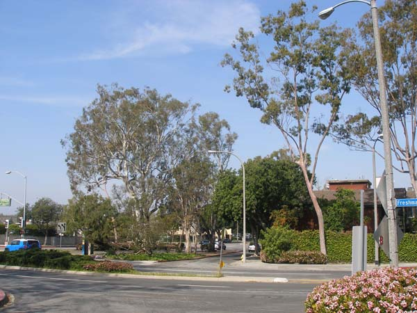 West Los Angeles College walk at Overland