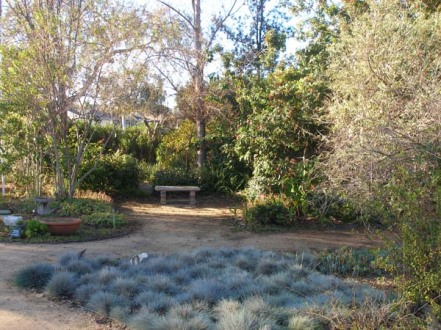 culver-city-garden-at-beatrice-and-mesmer
