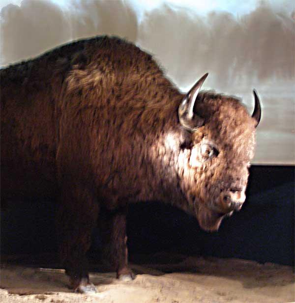 autry-national-center buffalo