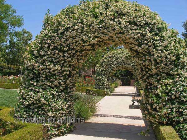gardens of the world jasmine