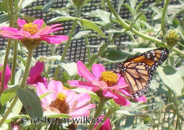 Inside the Butterfly Pavilion