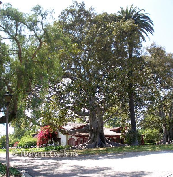 Rancho Los Alamitos trees