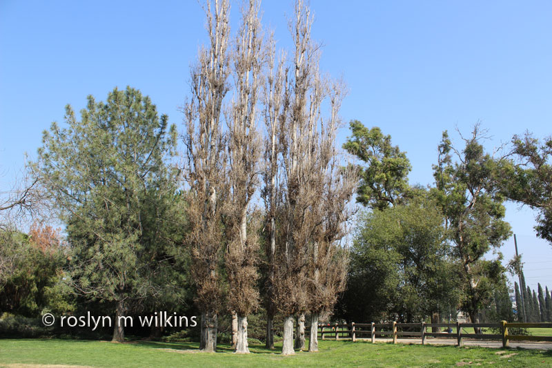 autry center trees