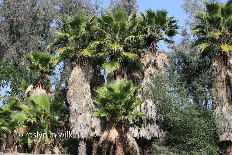 autry museum trees
