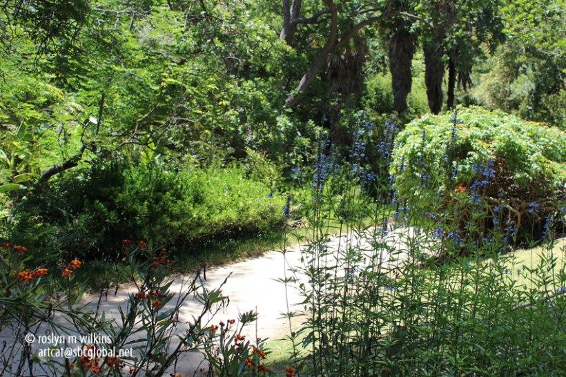 ucla-botanical-gardens-062113-072-C-850px