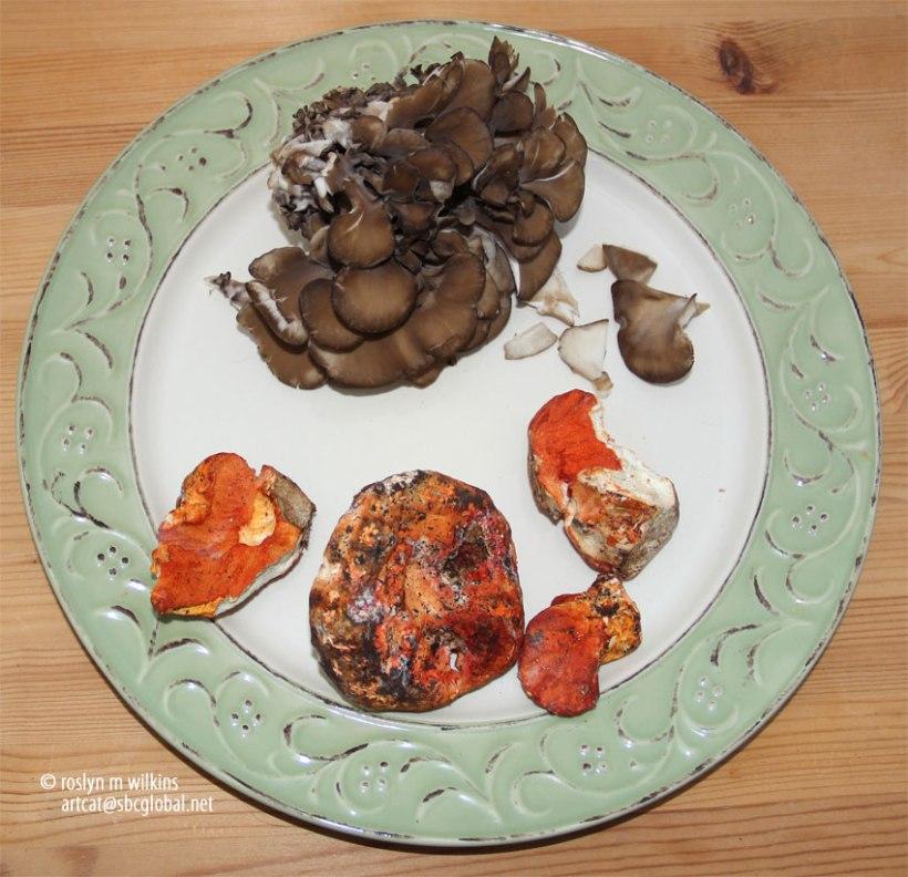 mushrooms culver city farmers market