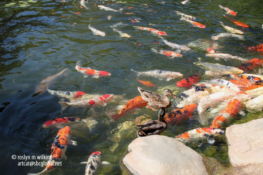 301 moved permanently for Garden state koi