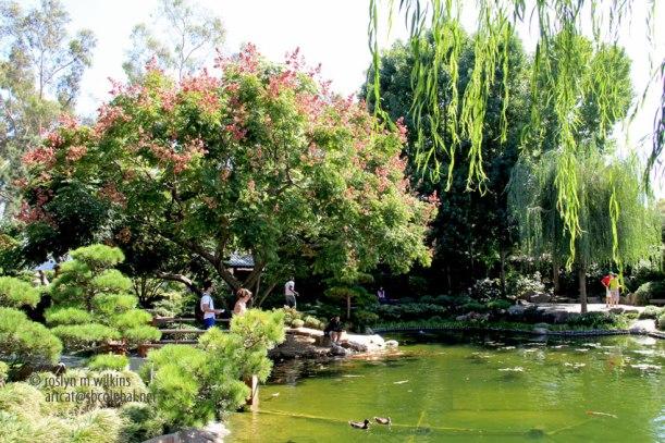 The Earl Burns Miller Japanese Garden