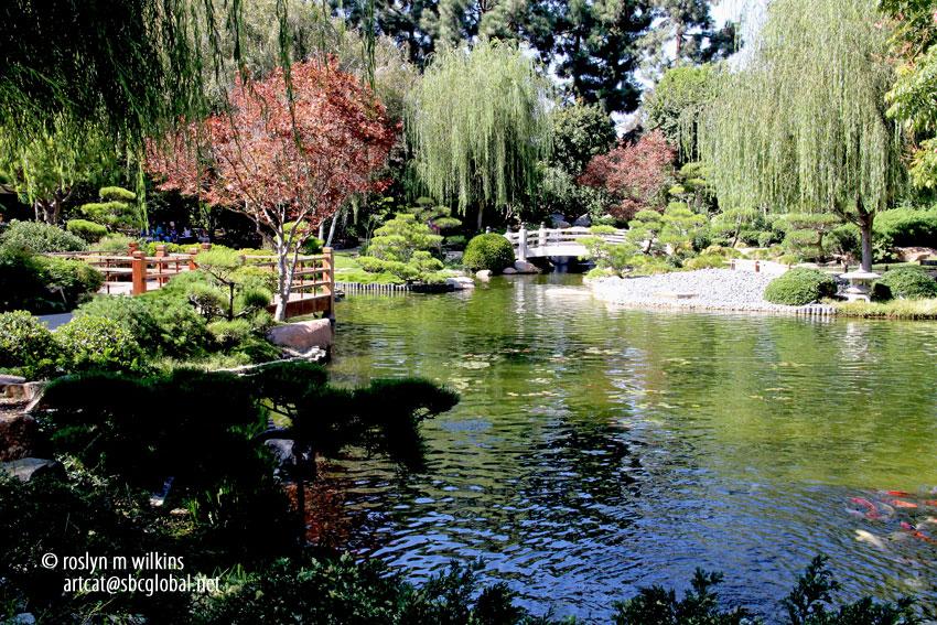 The earl burns miller japanese garden at california state for Csulb japanese garden koi pond