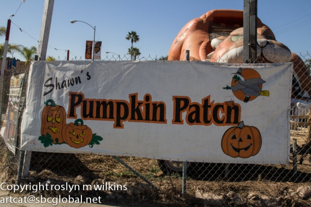 Shawn's Pumpkin Patch, Culver City