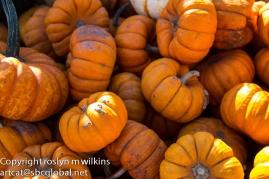 Plenty of pumpkins for everybody