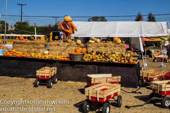 A convenient way to transport your chosen pumpkins