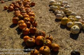 Marching pumpkins