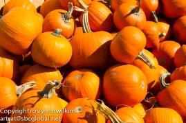 Enough pumpkins for you?