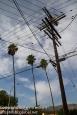Utility poles vs palm trees