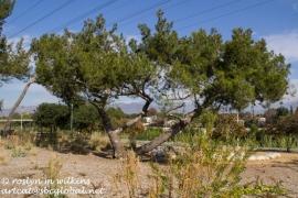 Multi-directional tree trunks