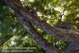 Nice tree trunk