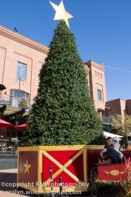 Lovely unadorned Christmas tree