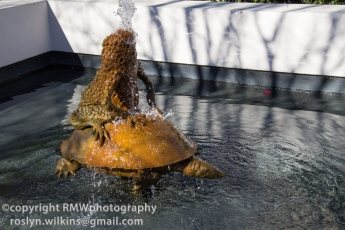 A frog riding a turtle... don't ask me