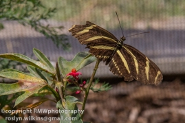los-angeles-natural-history-museum-butterflies-060614-026-C-850px