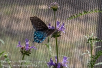 los-angeles-natural-history-museum-butterflies-060614-028-C-850px