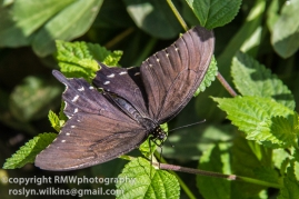 los-angeles-natural-history-museum-butterflies-060614-034-C-850px