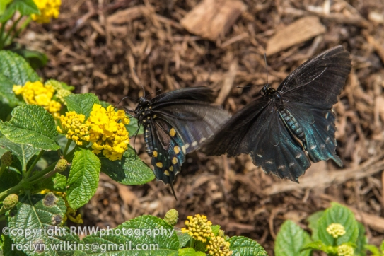 los-angeles-natural-history-museum-butterflies-060614-061-C-850px