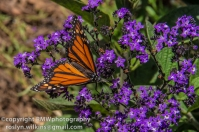 los-angeles-natural-history-museum-butterflies-060614-066-C-850px