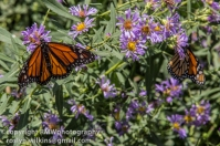 los-angeles-natural-history-museum-butterflies-060614-067-C-850px