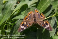 los-angeles-natural-history-museum-butterflies-060614-073-C-850px