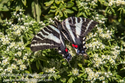 los-angeles-natural-history-museum-butterflies-060614-078-C-850px