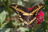 los-angeles-natural-history-museum-butterflies-060614-082-C-850px