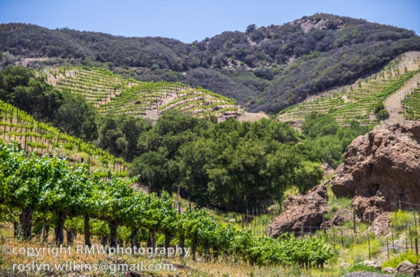 malibu family wines at saddlerock ranch