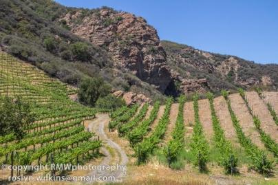 malibu-family-wines-060114-044-C-850px