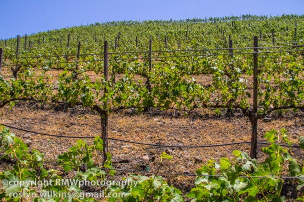 Malibu family wines at saddlerock ranch