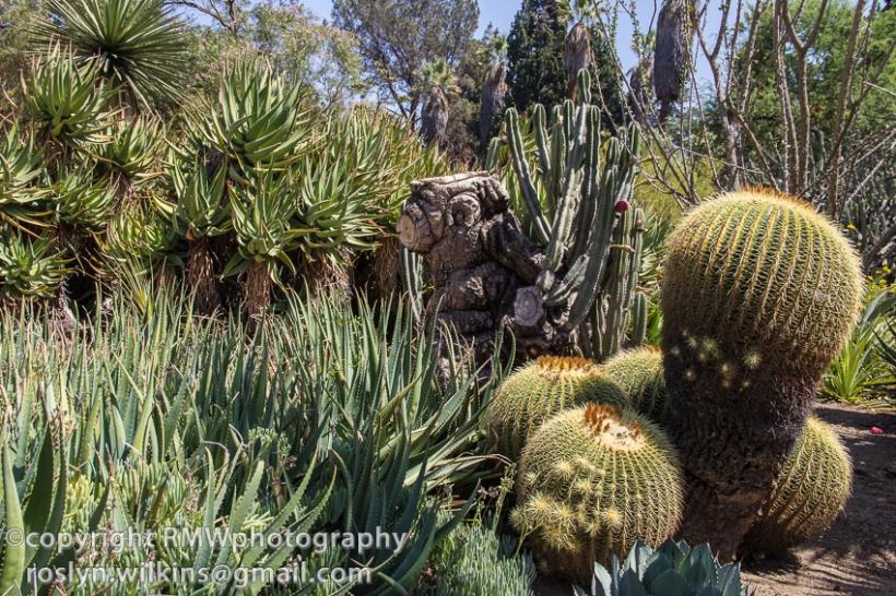 huntington library desert garden