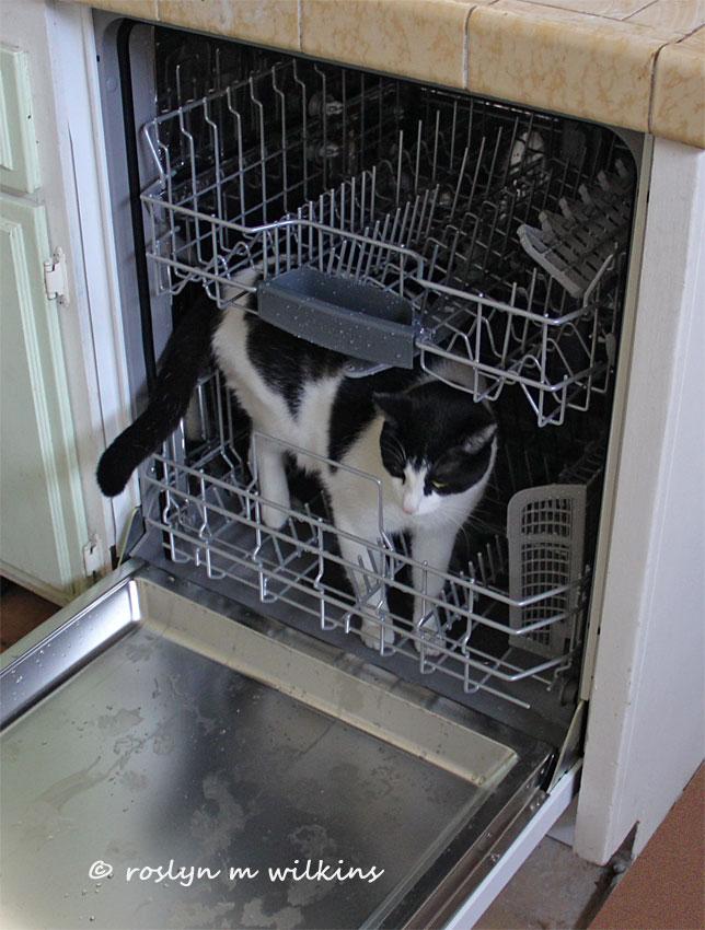 freddie cat in dishwasher