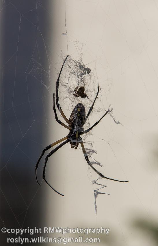Spider Pavilion Natural History Museum