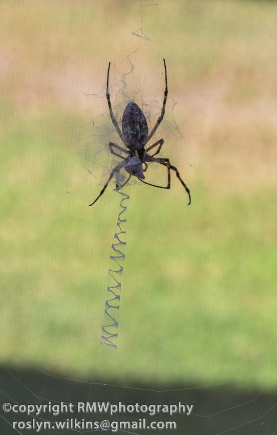 natural history museum spider pavilion