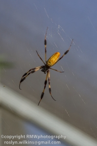 spider-pavilion-102314-098-850px