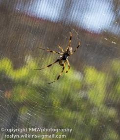 spider-pavilion-102314-112-850px