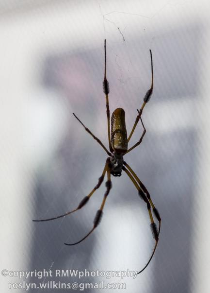 spider-pavilion-102314-115-850px