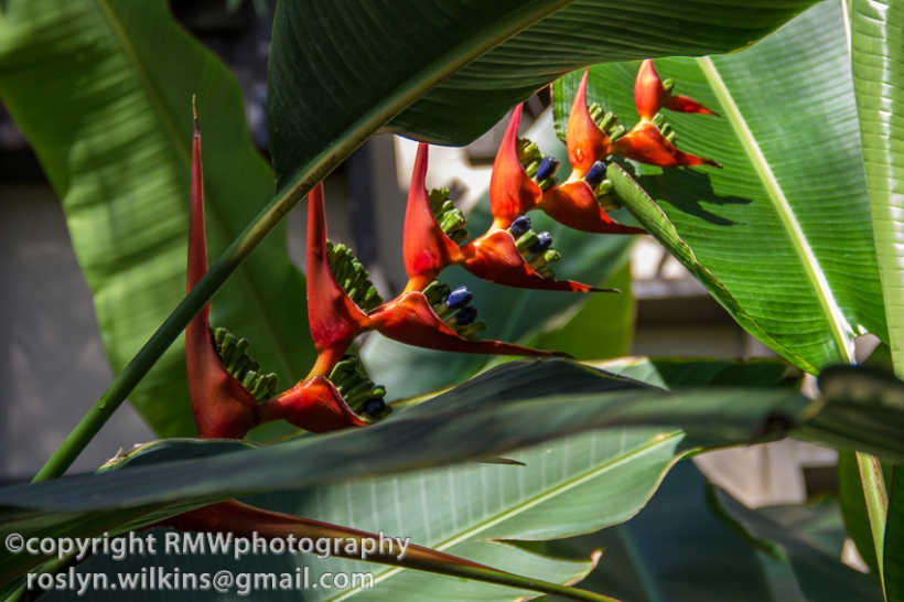 san diego balboa park botanical building