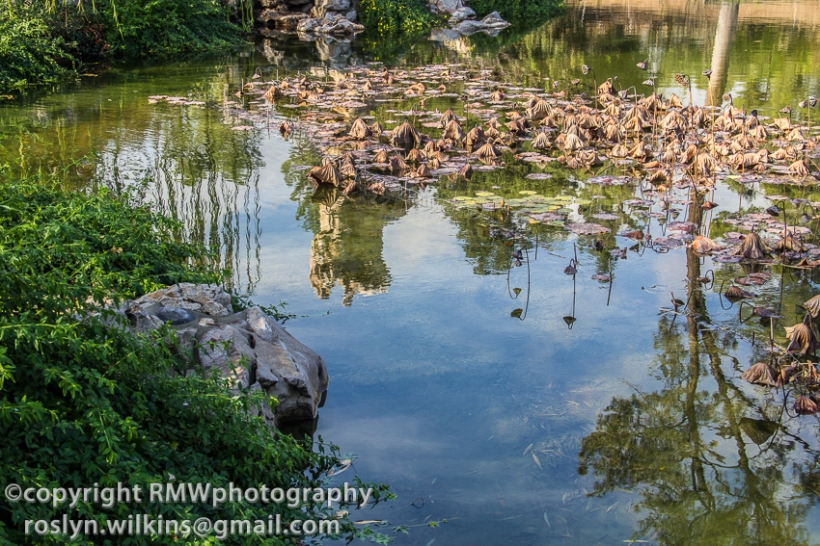 huntington library reflections