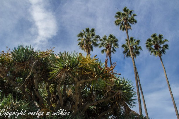 beverly-hills-121414-143-C-850px