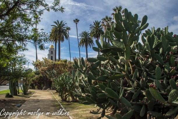 beverly hills cactus garden