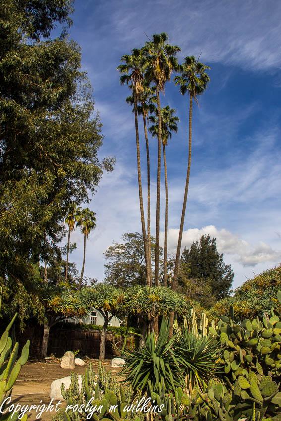beverly  gardens cactus garden