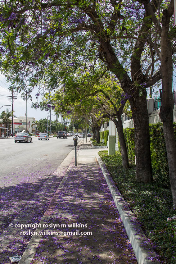 culver boulevard culver city